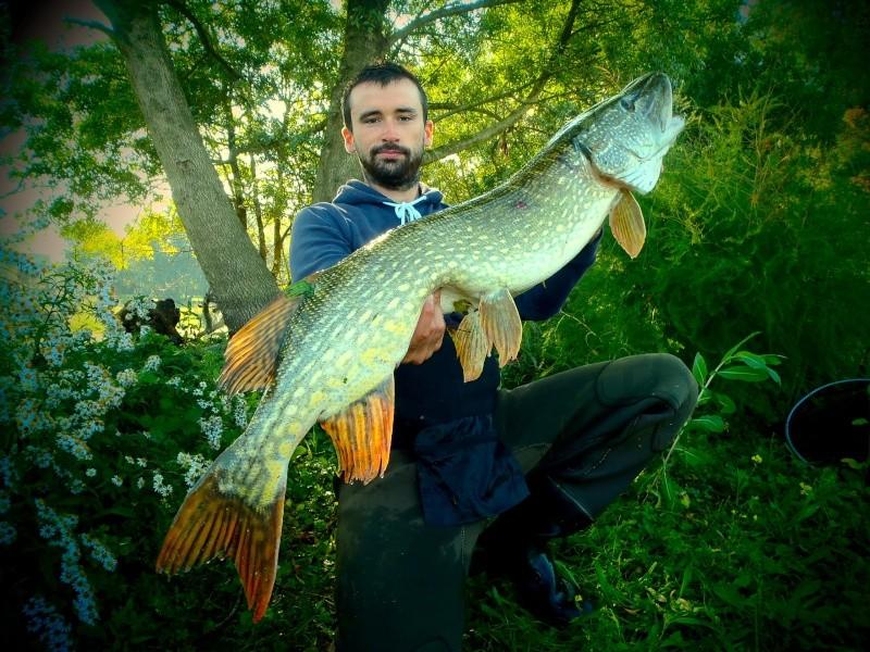 La pêche russe akhtouba le silure de vidéo