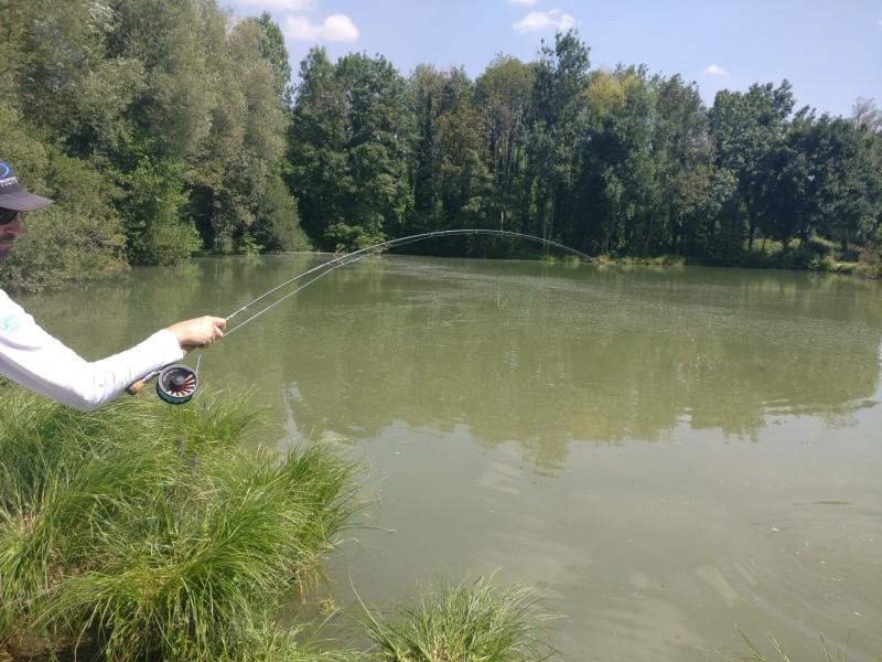 Blank en pression lors d'une partie de pêche de la carpe à la mouche