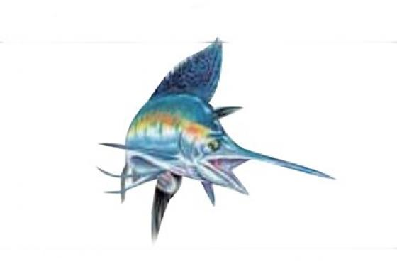 Sticker sailfish 4x3